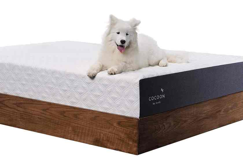 dog on mattress