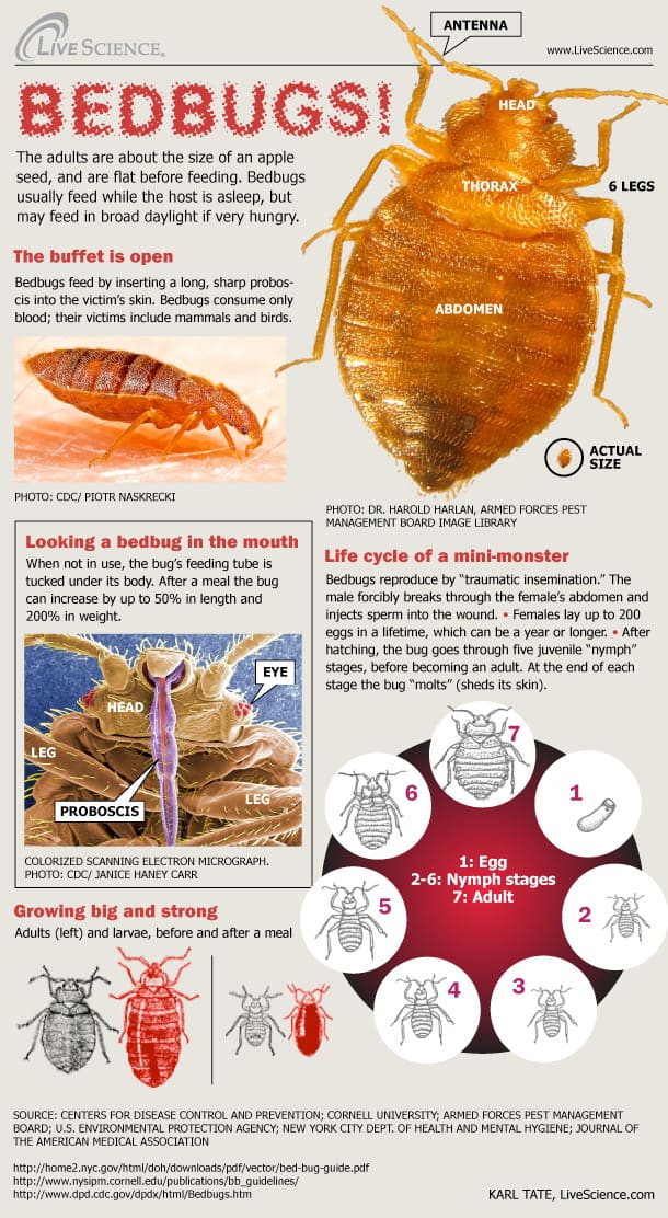 bedbug introduction from lifescience and where do where do bed bugs come from and what do bed bugs look like