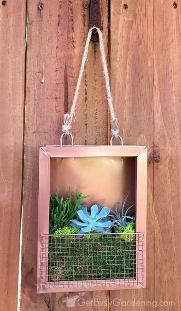 Water Garden Plants Sun