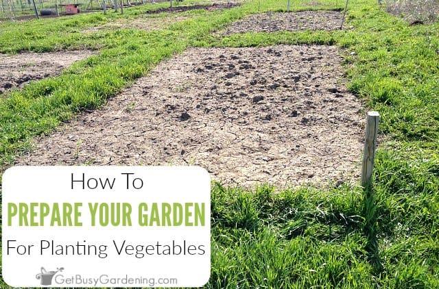 Raised Vegetable Garden Soil Preparation