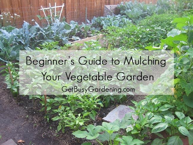 Leaf Mulch Vegetable Garden