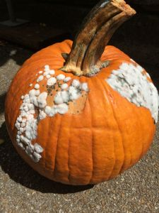 pumpkin, carving, halloween, preserving
