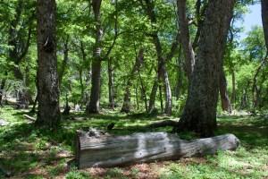 Woodland & Log