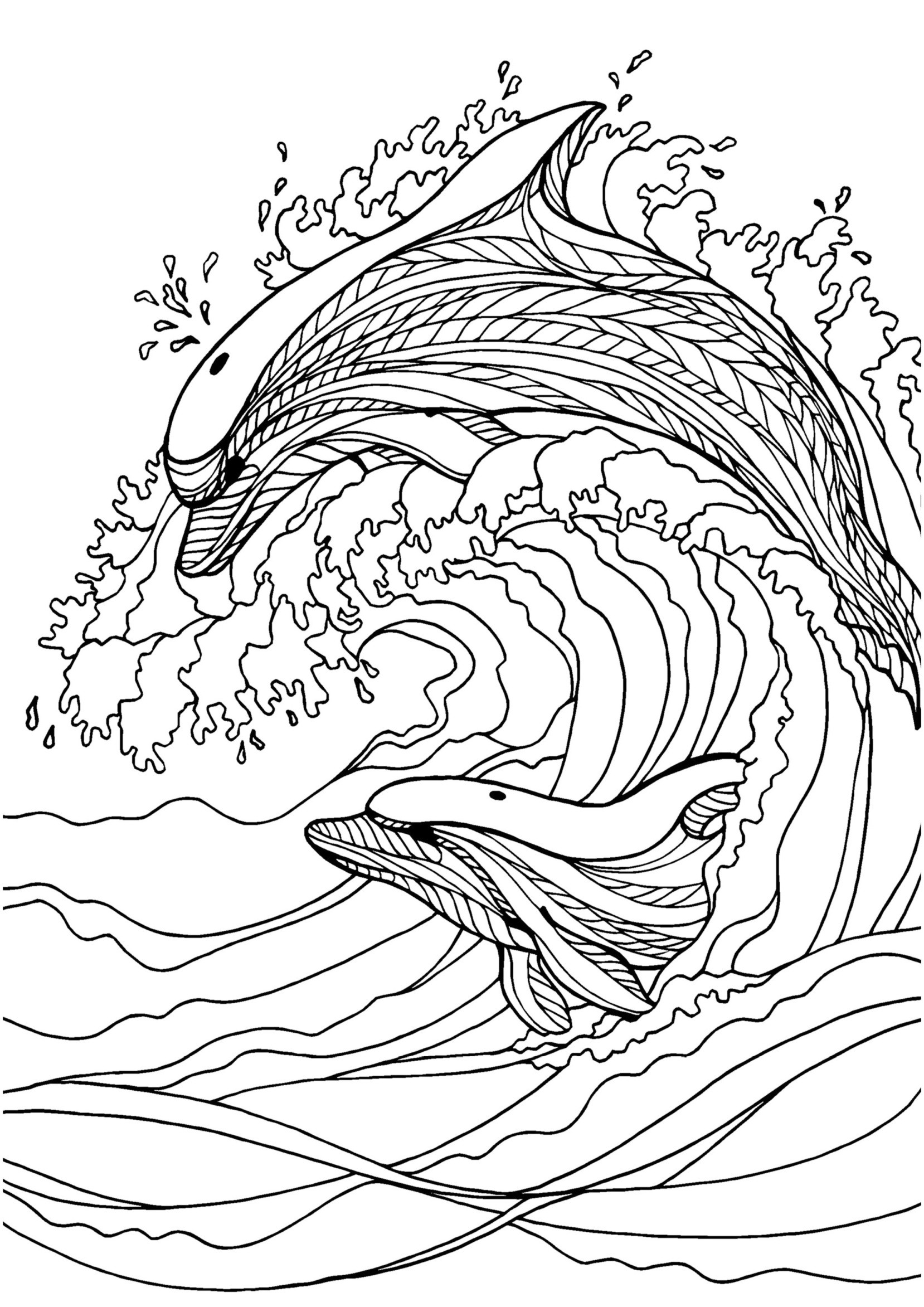 Adult Coloring Pages Dolphin At Getcolorings