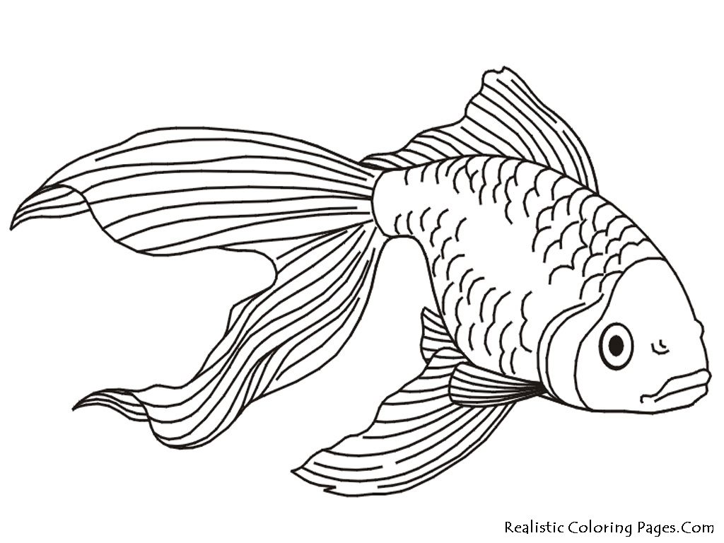 Anemone Coloring Page At Getcolorings