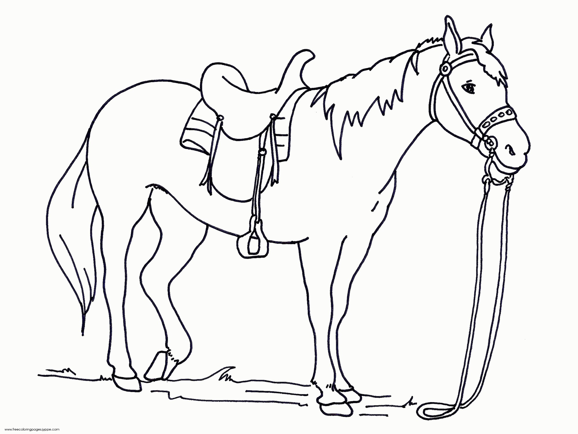 Arabian Horse Coloring Pages At Getcolorings