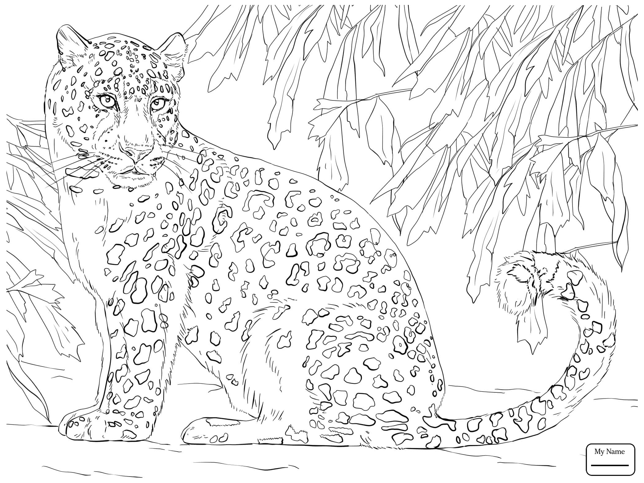 Baby Snow Leopard Coloring Pages At Getcolorings