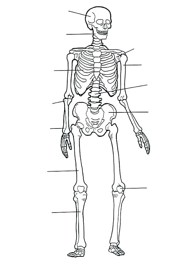 body parts coloring pages at getcolorings  free