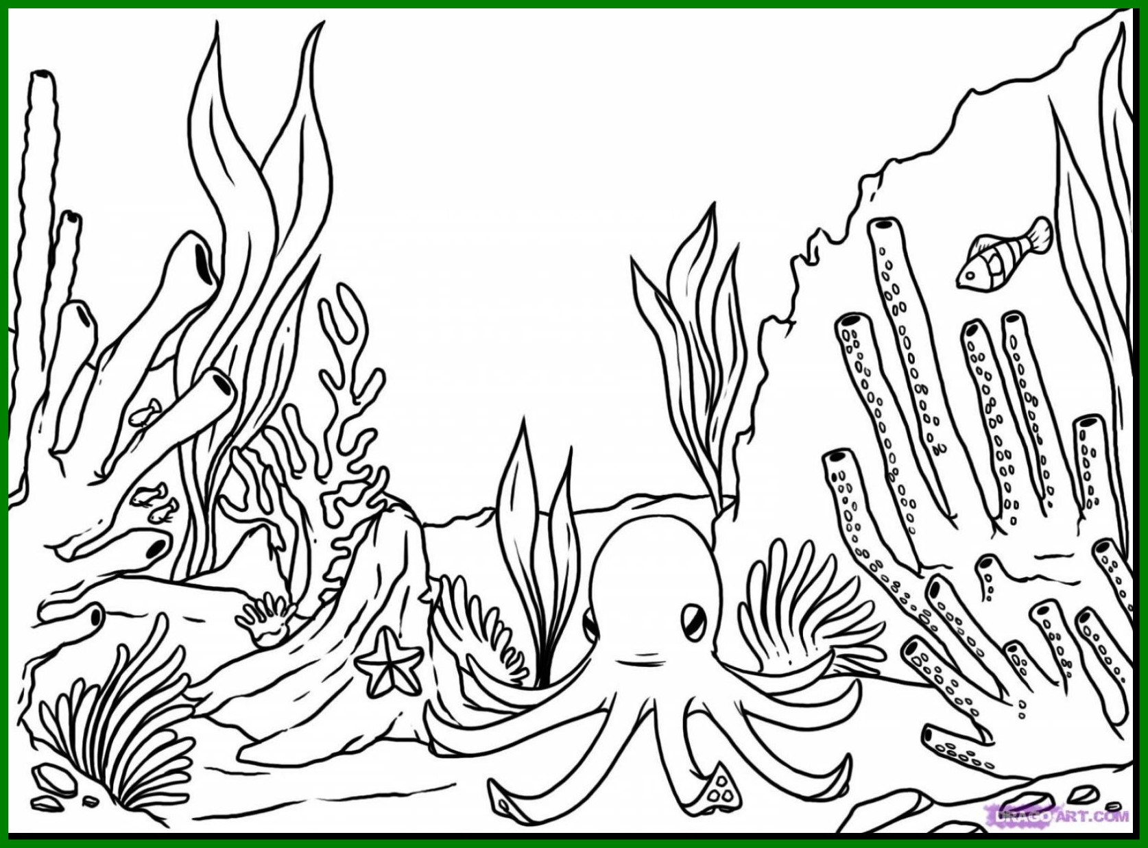 Coral Reef Coloring Page At Getcolorings