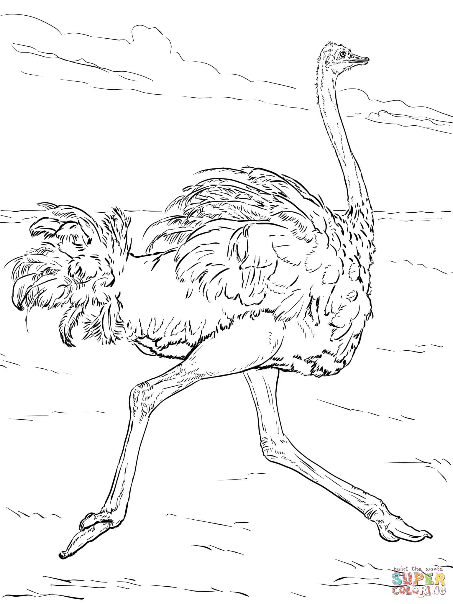 Desert Animals Coloring Pages At Getcolorings