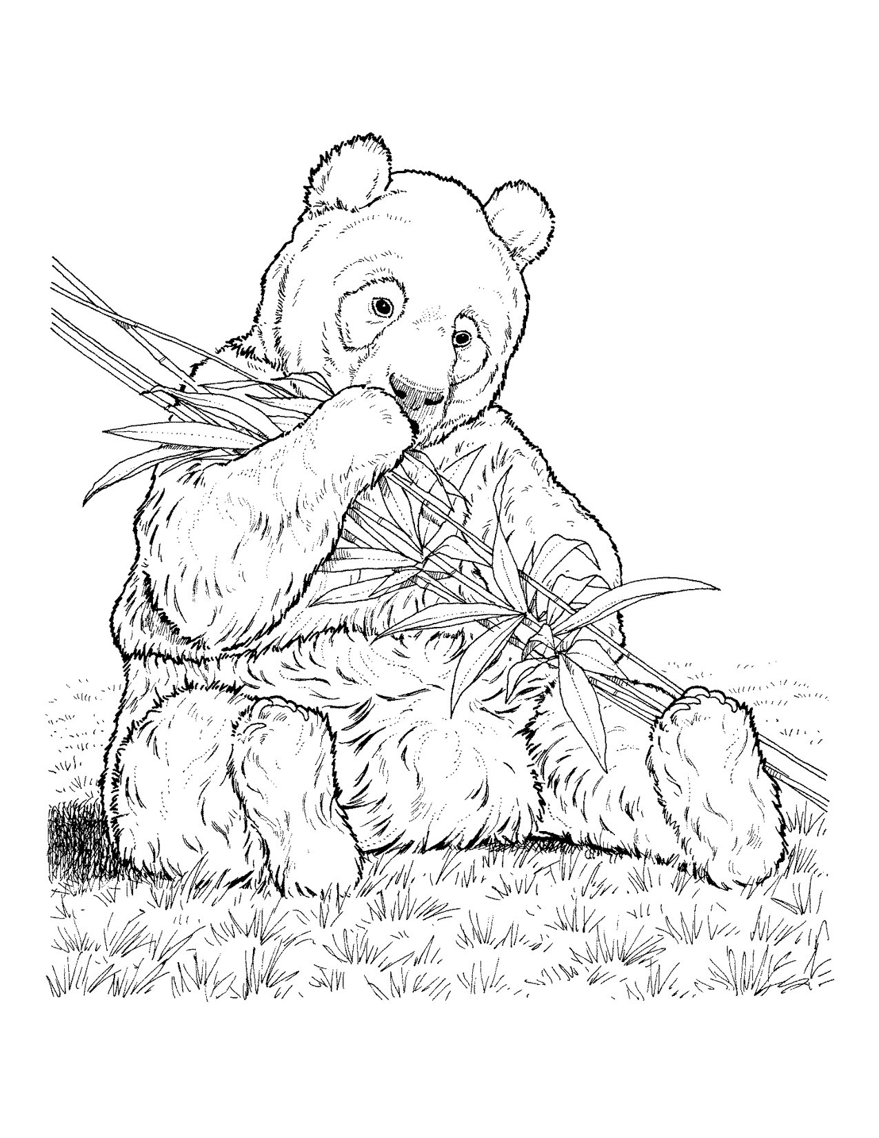 Endangered Animals Coloring Pages At Getcolorings