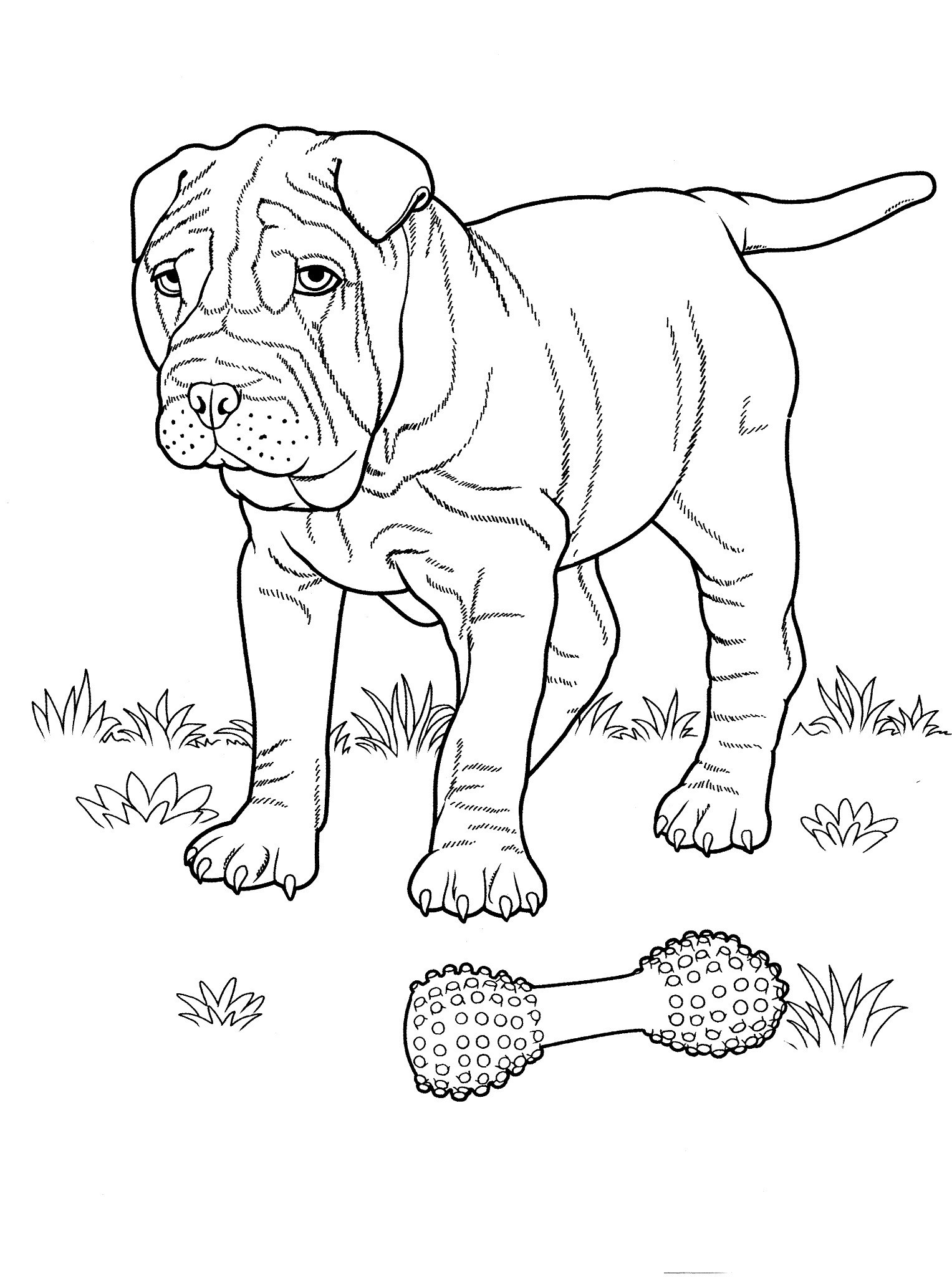 English Mastiff Coloring Pages At Getcolorings