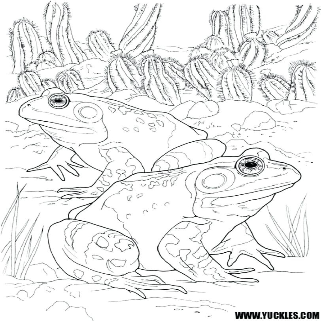 Frog And Toad Coloring Pages At Getcolorings