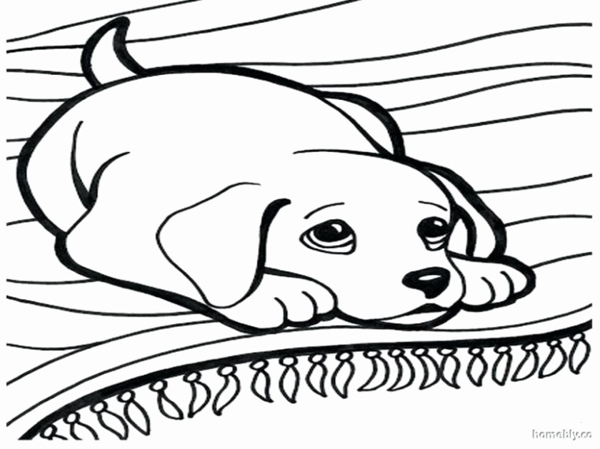 golden retriever puppy coloring pages at getcolorings