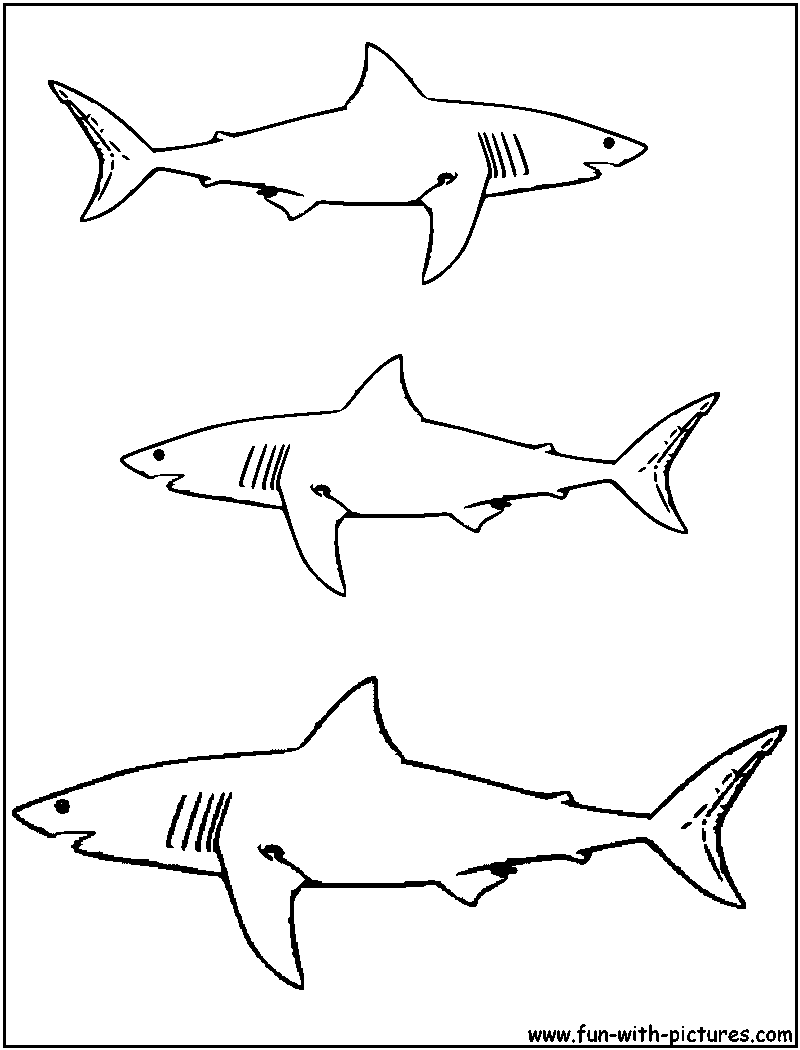 great white shark coloring page at getcolorings  free