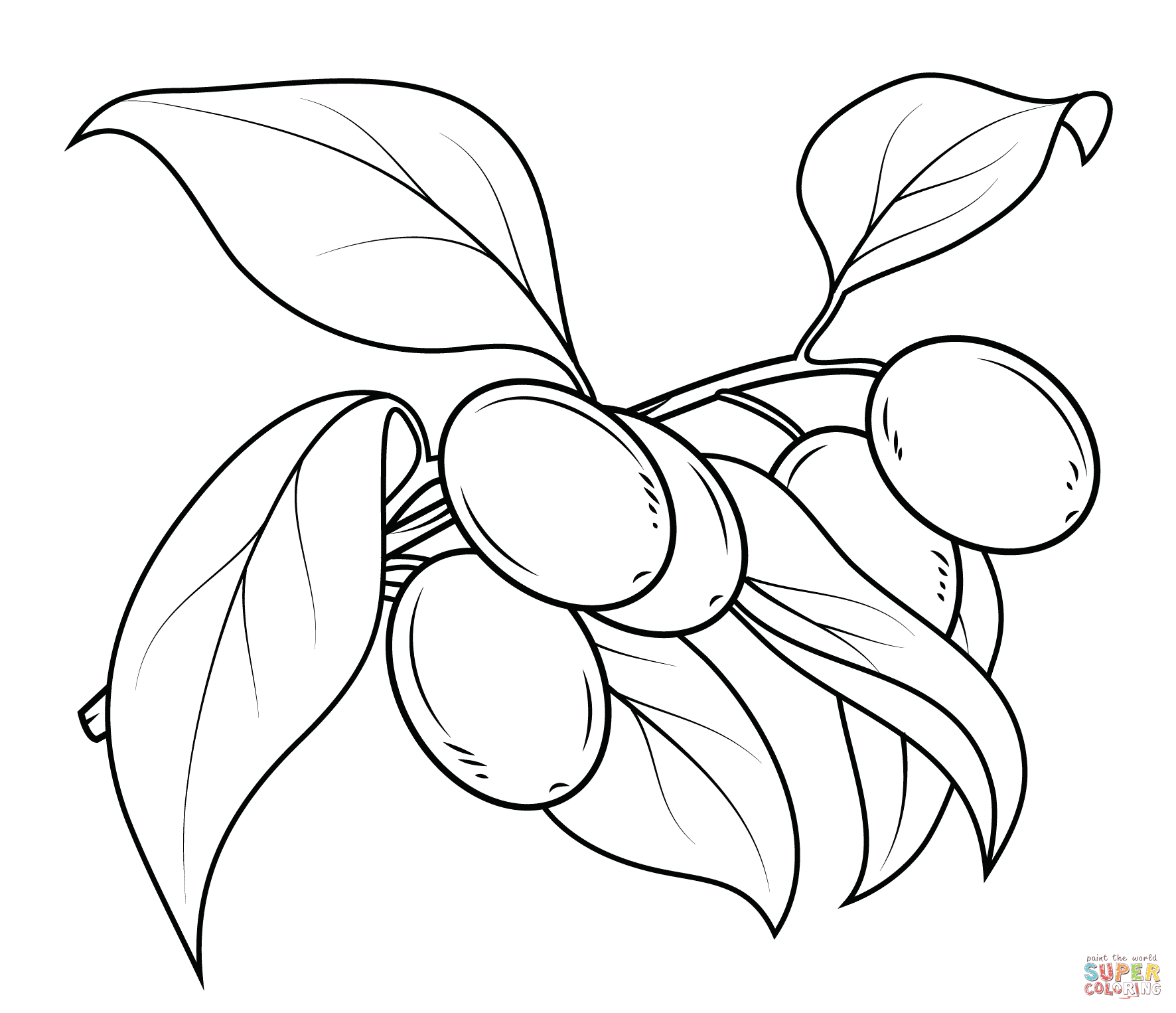Olive Tree Coloring Page At Getcolorings