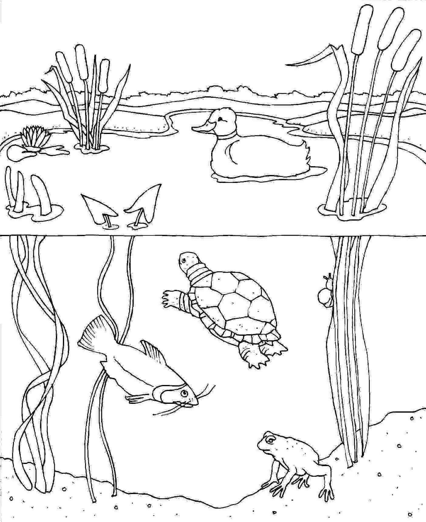Pond Animals Coloring Pages At Getcolorings