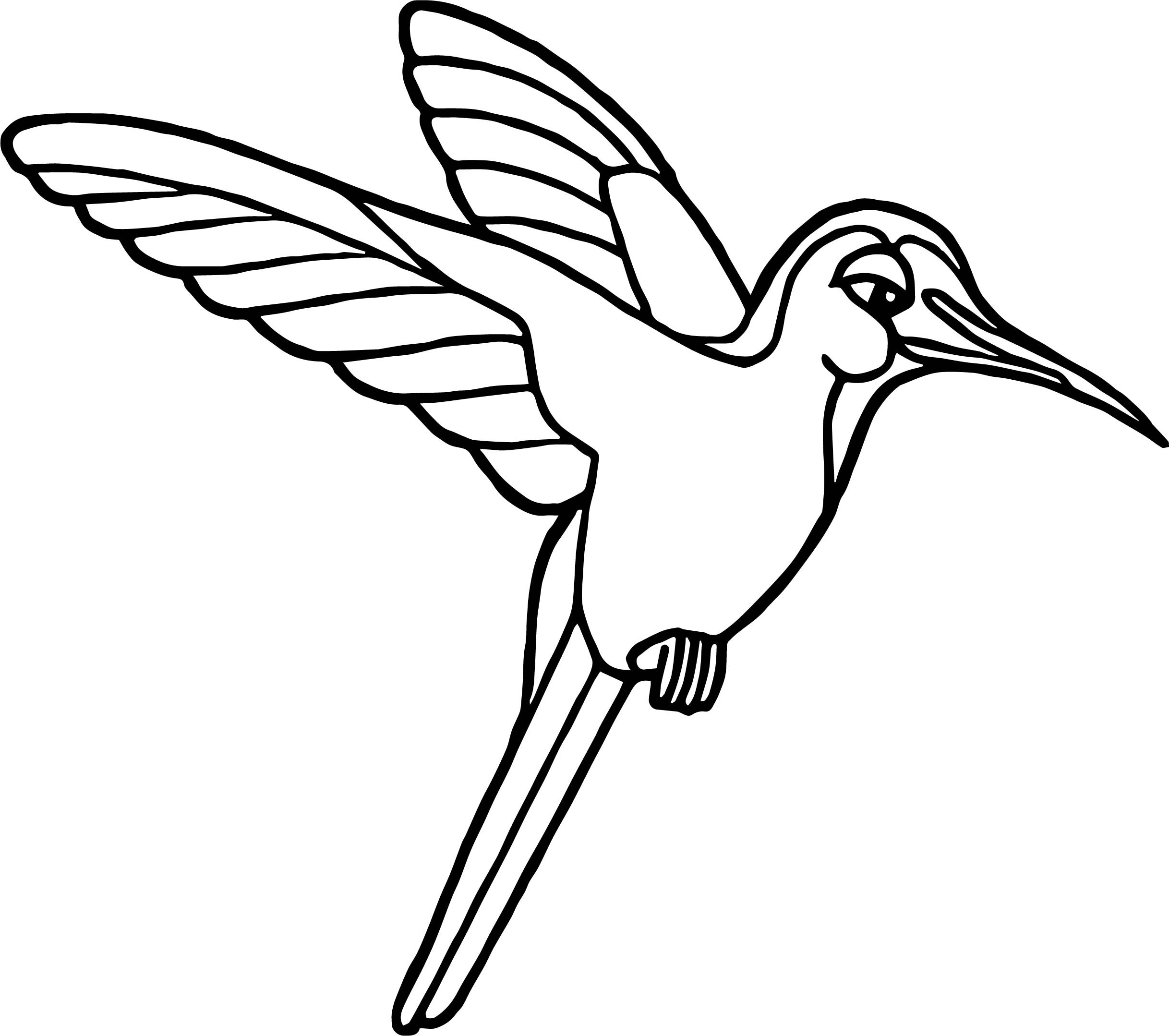 Rainforest Birds Coloring Pages At Getcolorings
