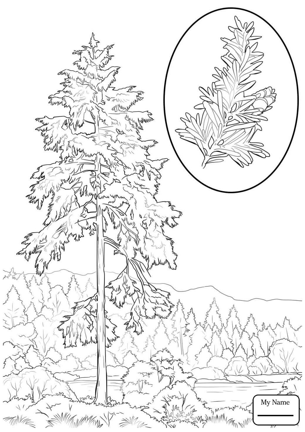 Redwood Tree Coloring Pages At Getcolorings