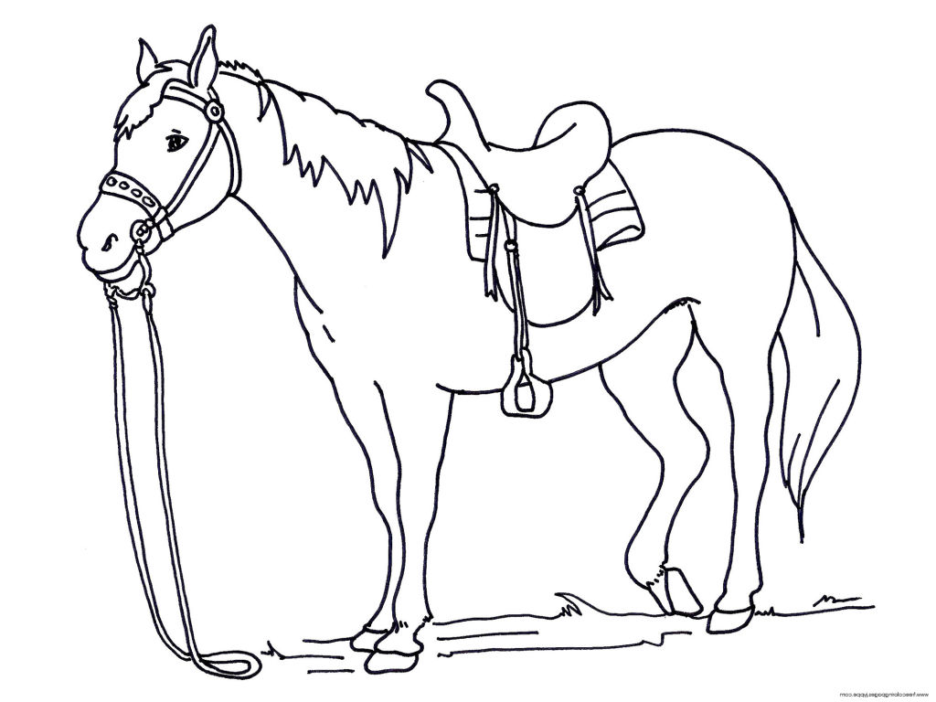 Shetland Pony Coloring Pages At Getcolorings