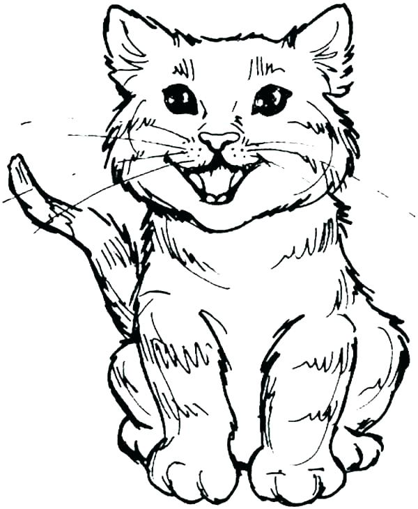 wild cat coloring pages at getcolorings  free