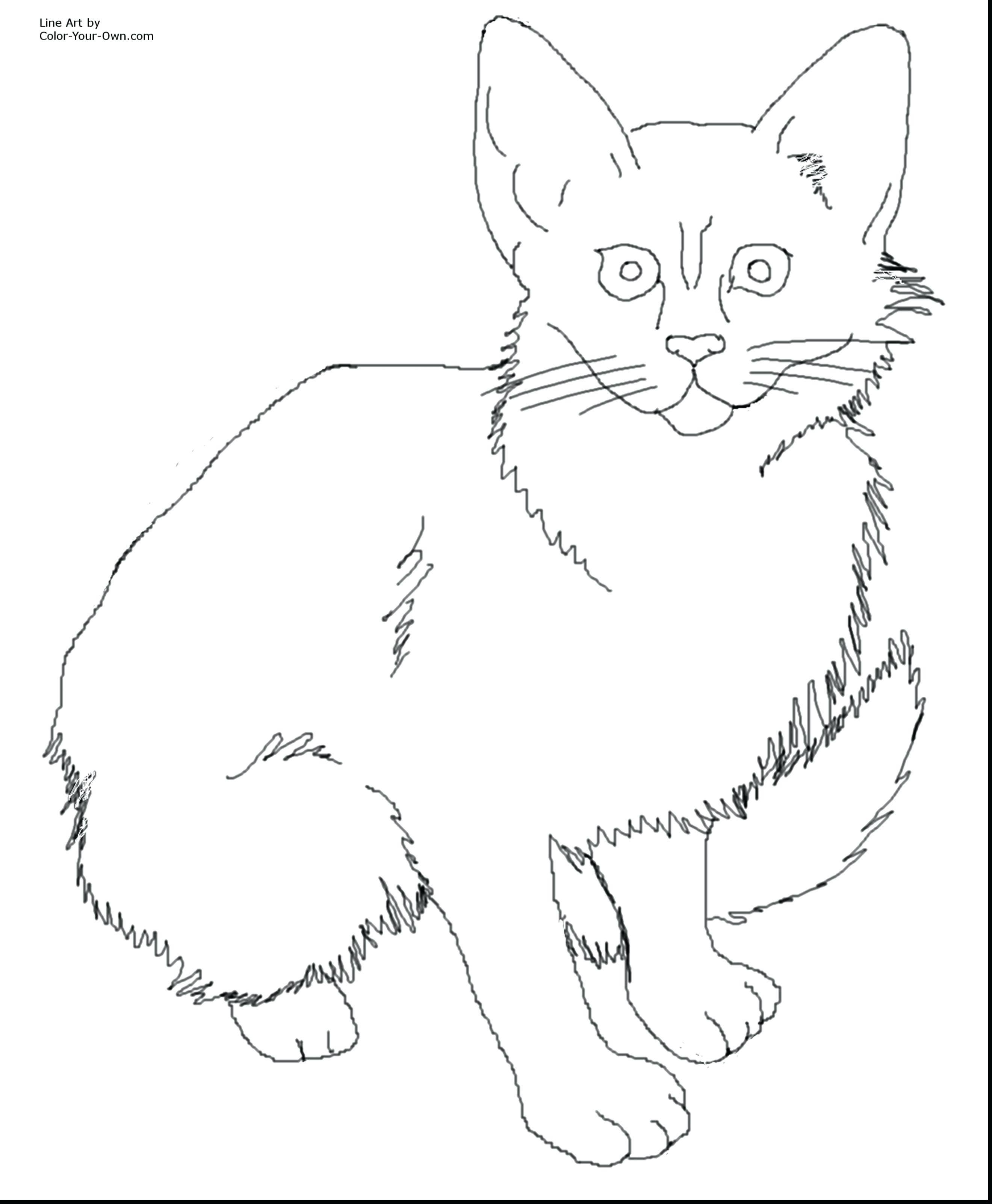 Wild Cat Coloring Pages At Getcolorings