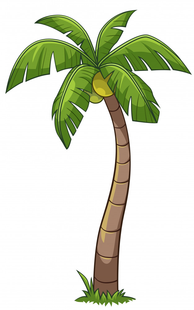 Coconut Tree Clipart at GetDrawings | Free download (626 x 1001 Pixel)