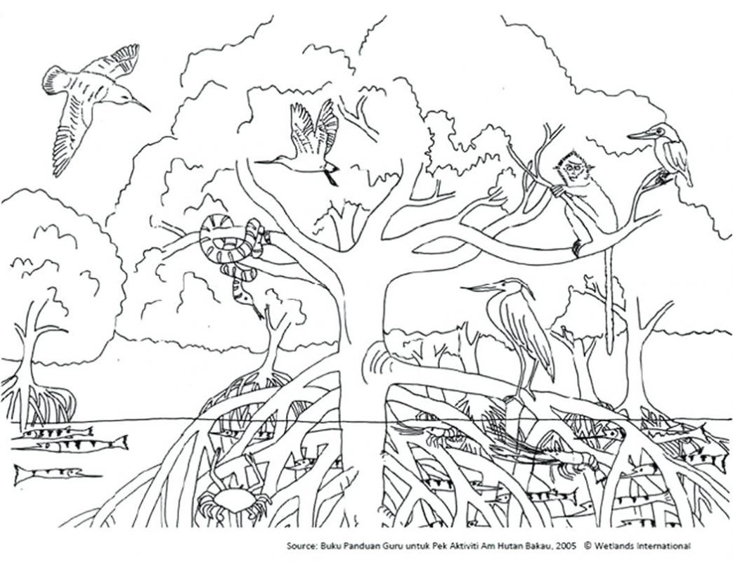 Ecosystem Coloring Pages At Getdrawings