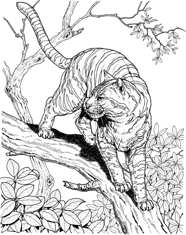 very detailed coloring pages # 30