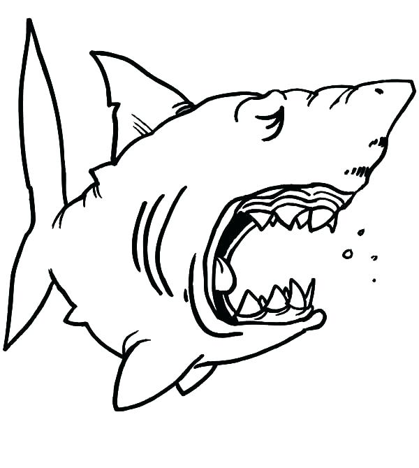 jaws coloring pages at getdrawings  free download