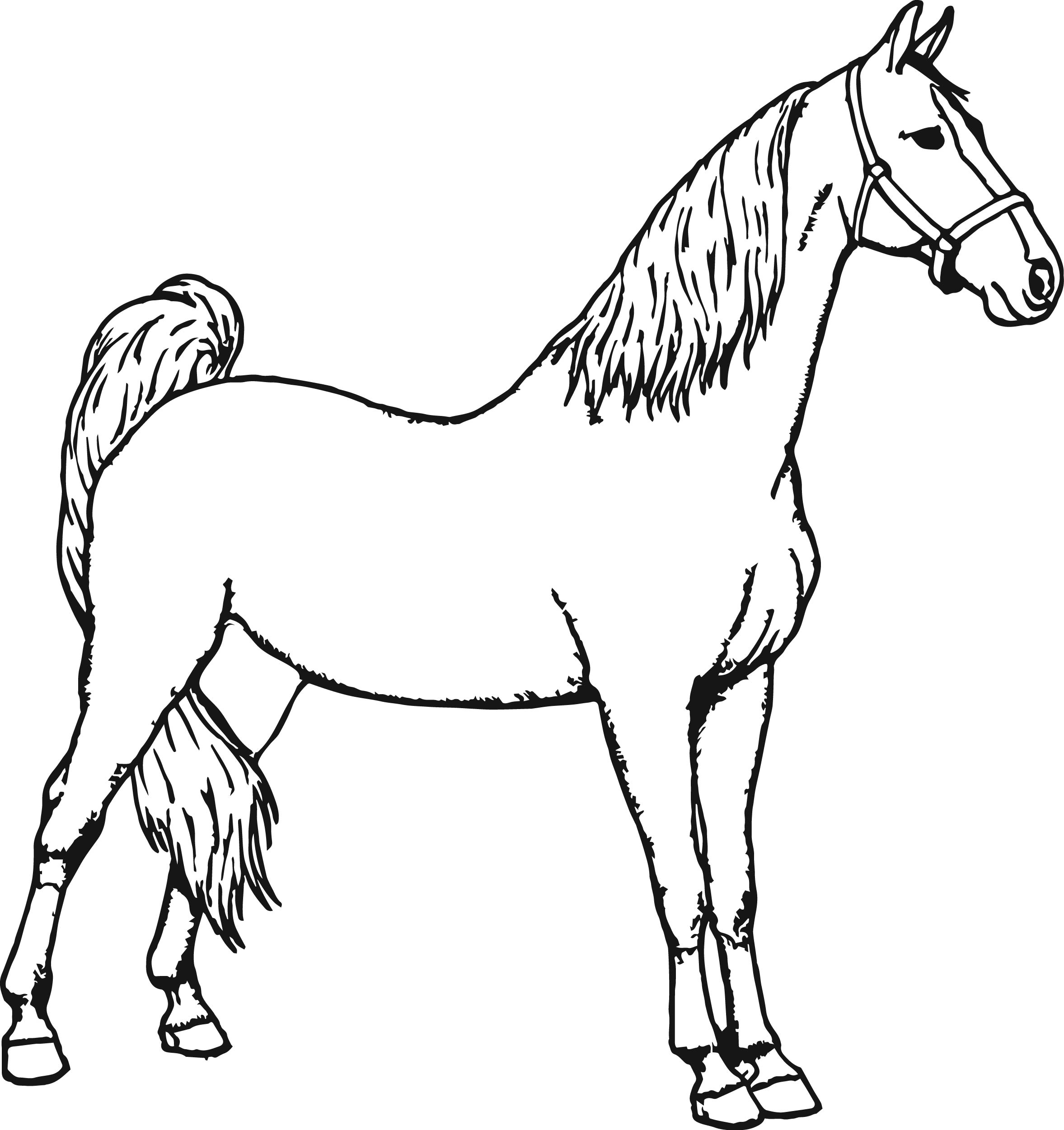 Miniature Horse Coloring Pages At Getdrawings