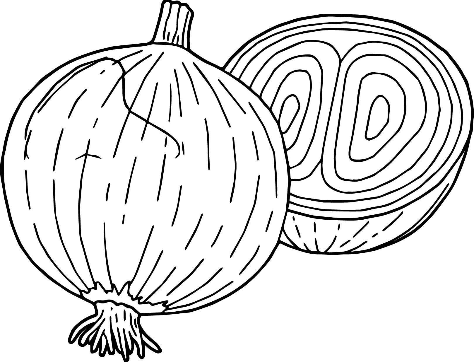 Onion Coloring Page At Getdrawings