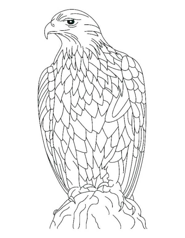 philadelphia eagles coloring pages # 86