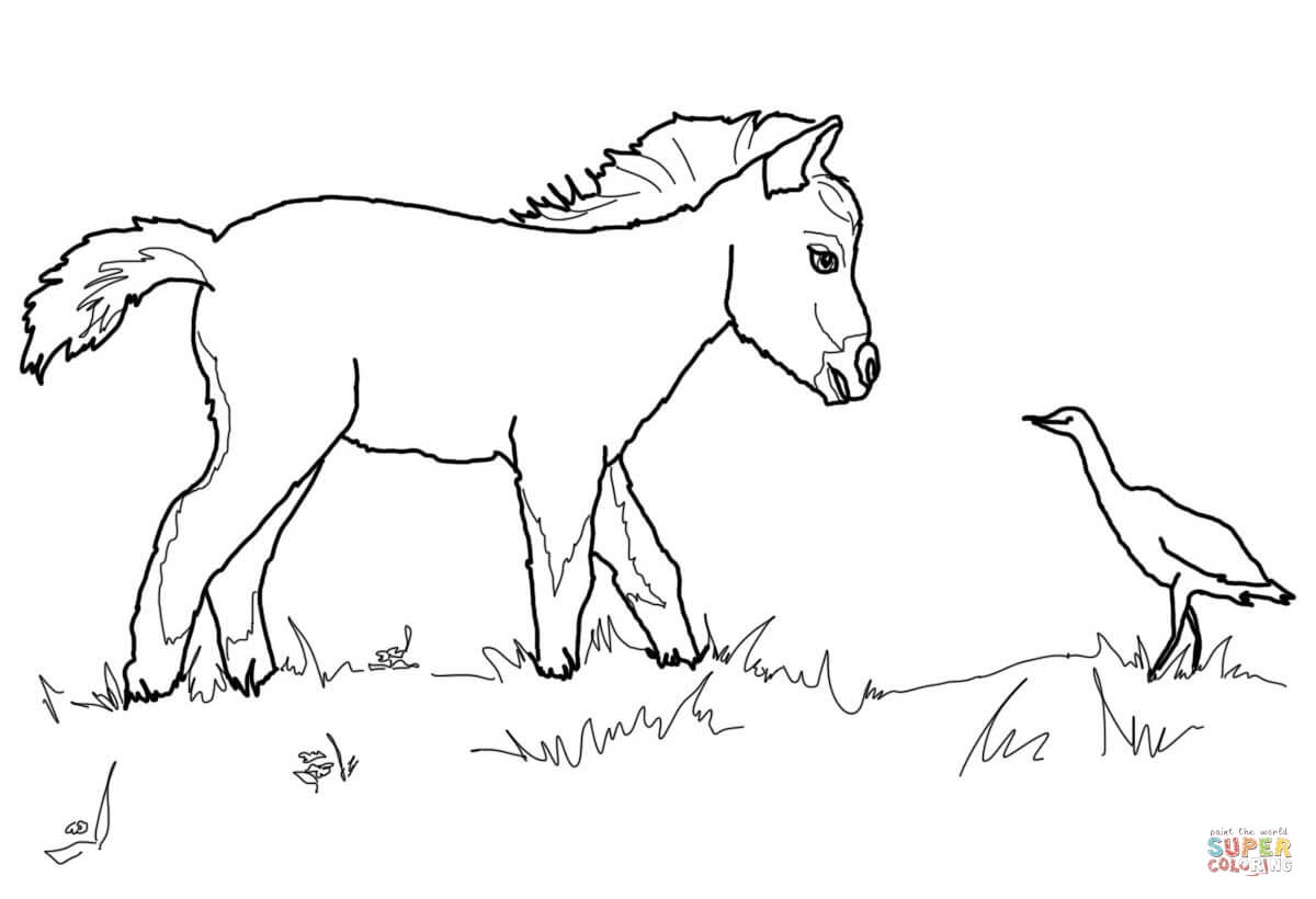 Quarter Coloring Page At Getdrawings