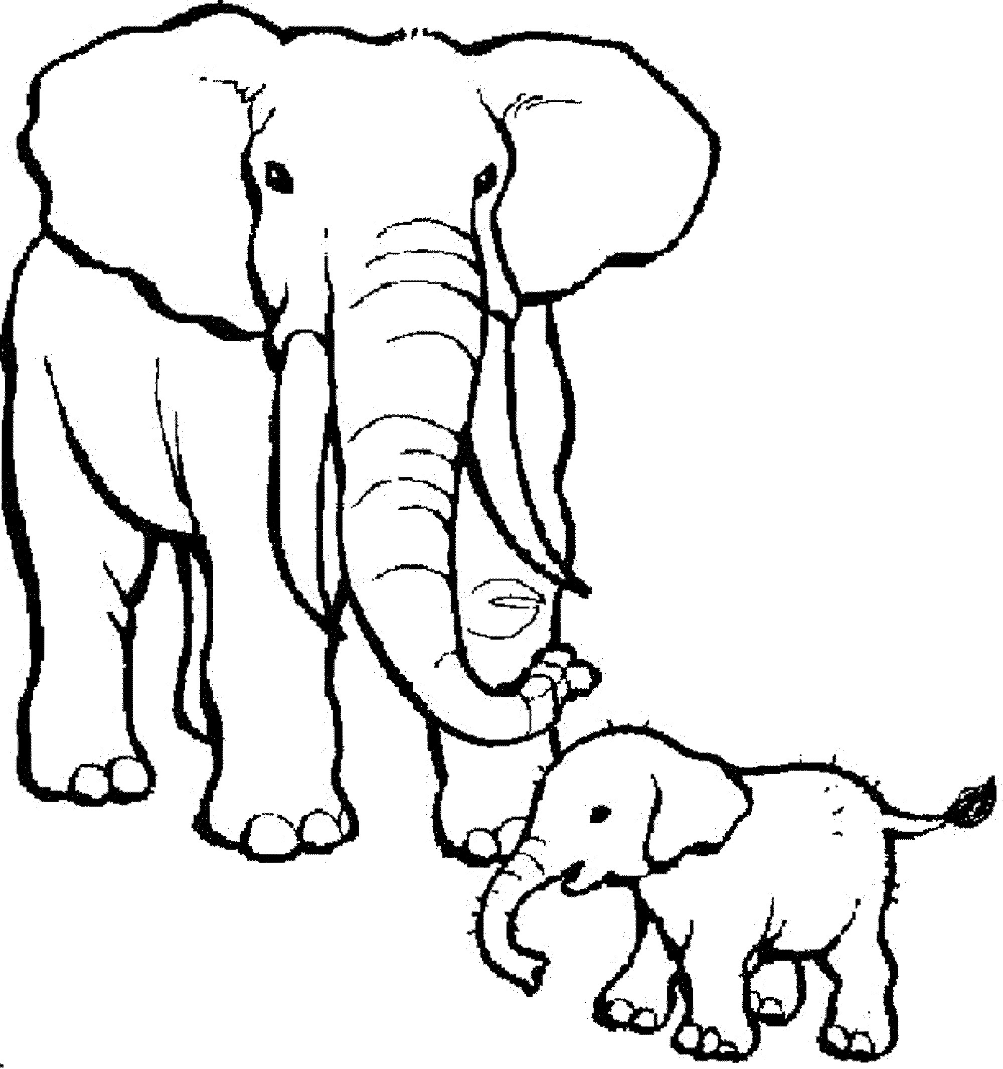 Realistic Elephant Coloring Pages At Getdrawings