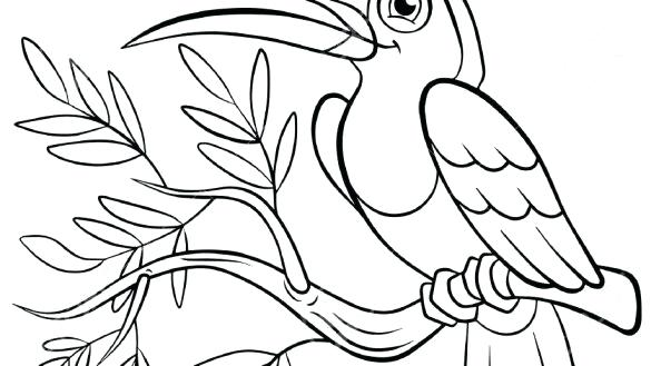 toucan bird coloring pages at getdrawings  free for
