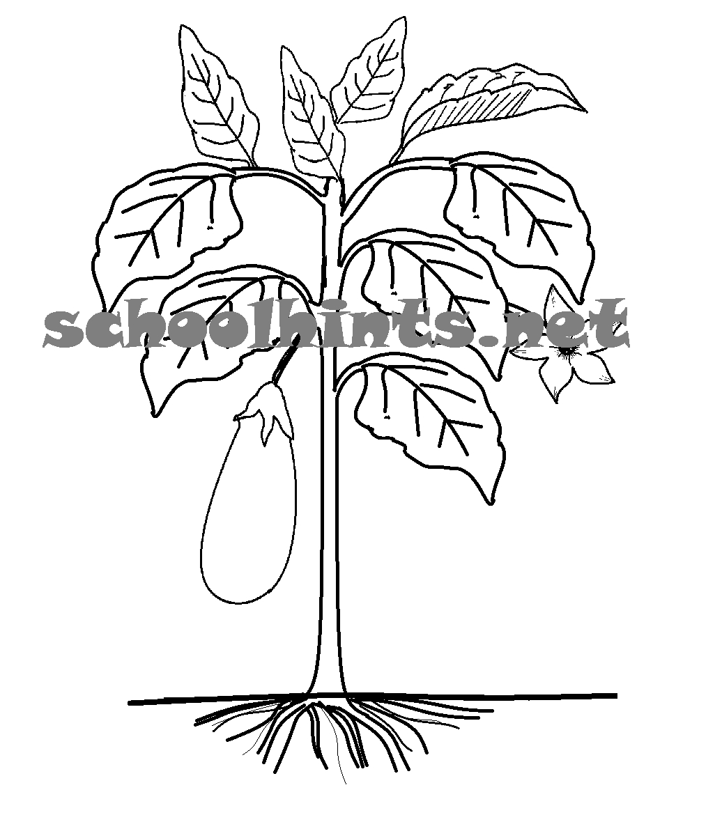 Tree Coloring Pages With Roots At Getdrawings