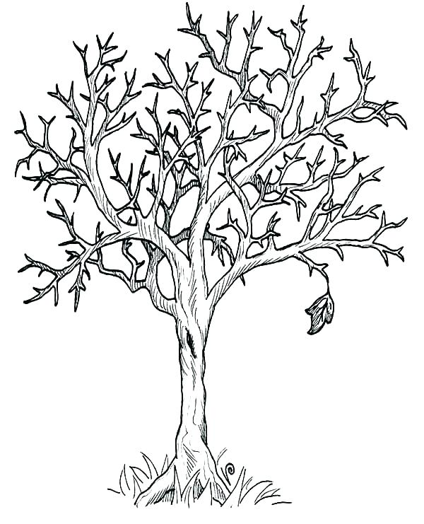 bare tree coloring page # 53