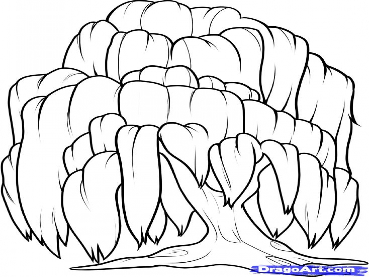 The Best Free Willow Tree Coloring Page Images Download
