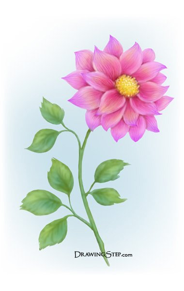 Beautiful Flowers Drawing Step By Step at GetDrawings com   Free for     380x600 Gallery Draw Beautiful Flowers Images