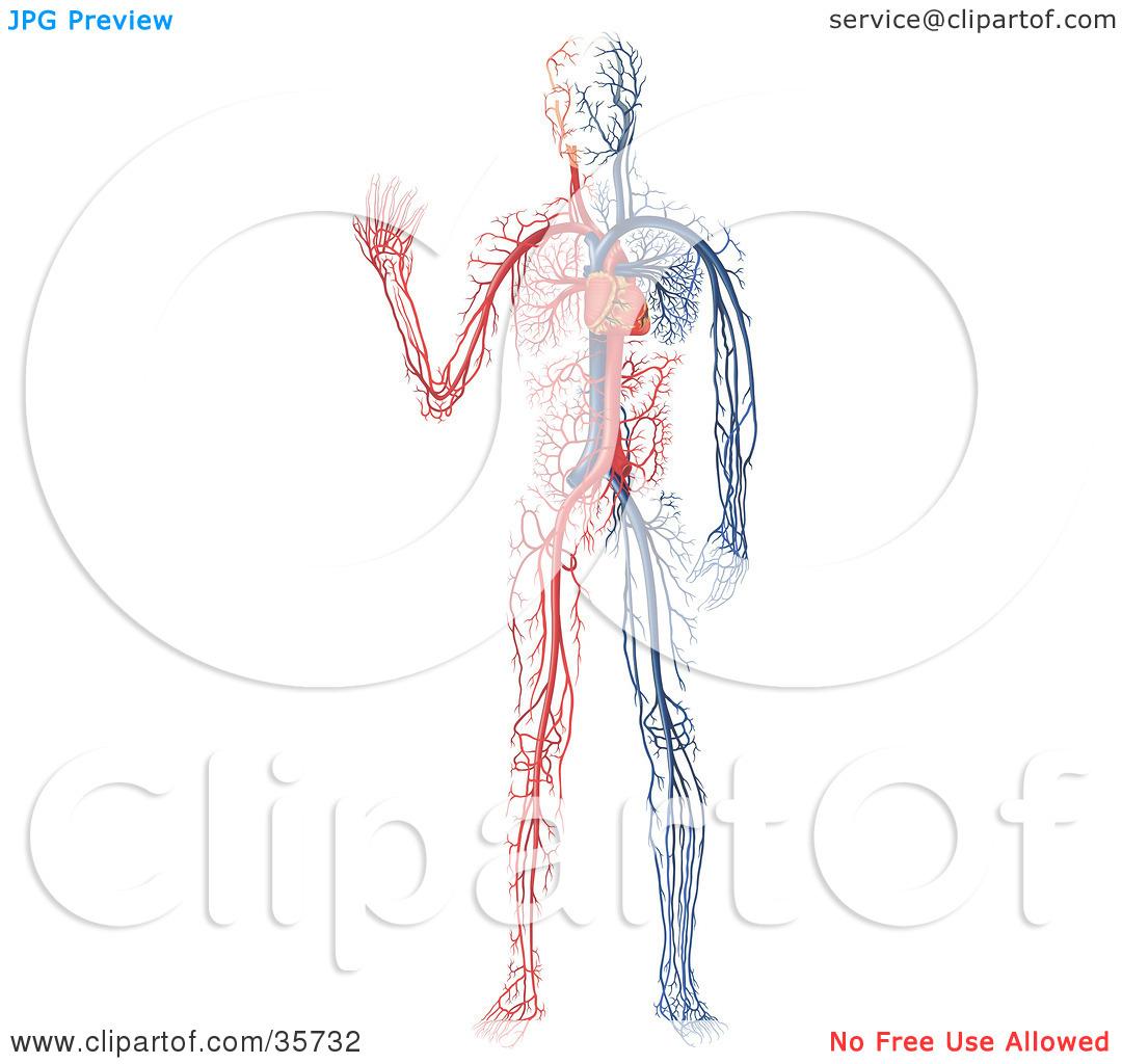 Blank Drawing Of Human Body At Getdrawings