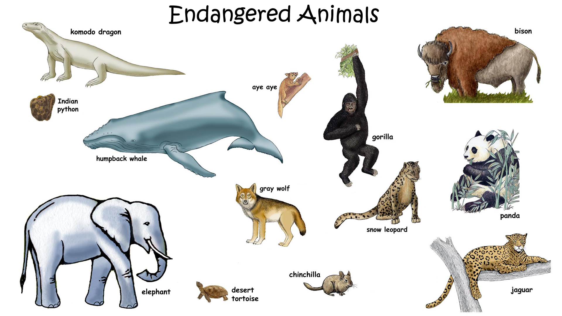 Endangered Animals Drawing At Getdrawings