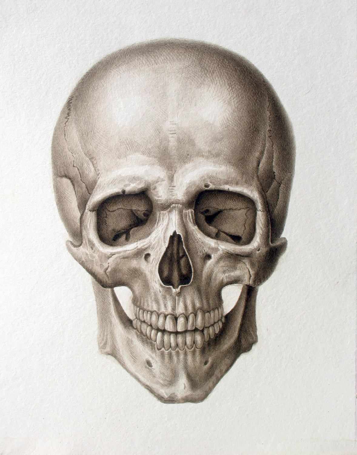 Human Skull Drawing Reference At Getdrawings
