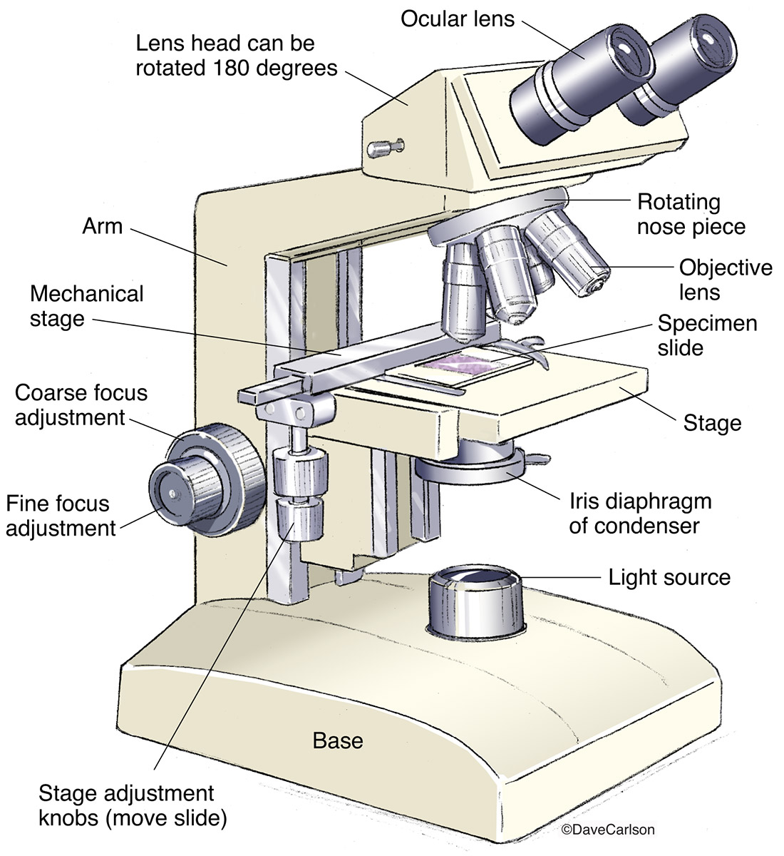 Microscope Drawing Worksheet At Getdrawings