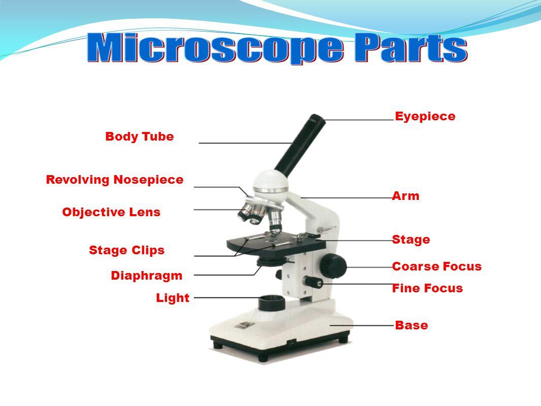 Microscope Parts Drawing At Getdrawings