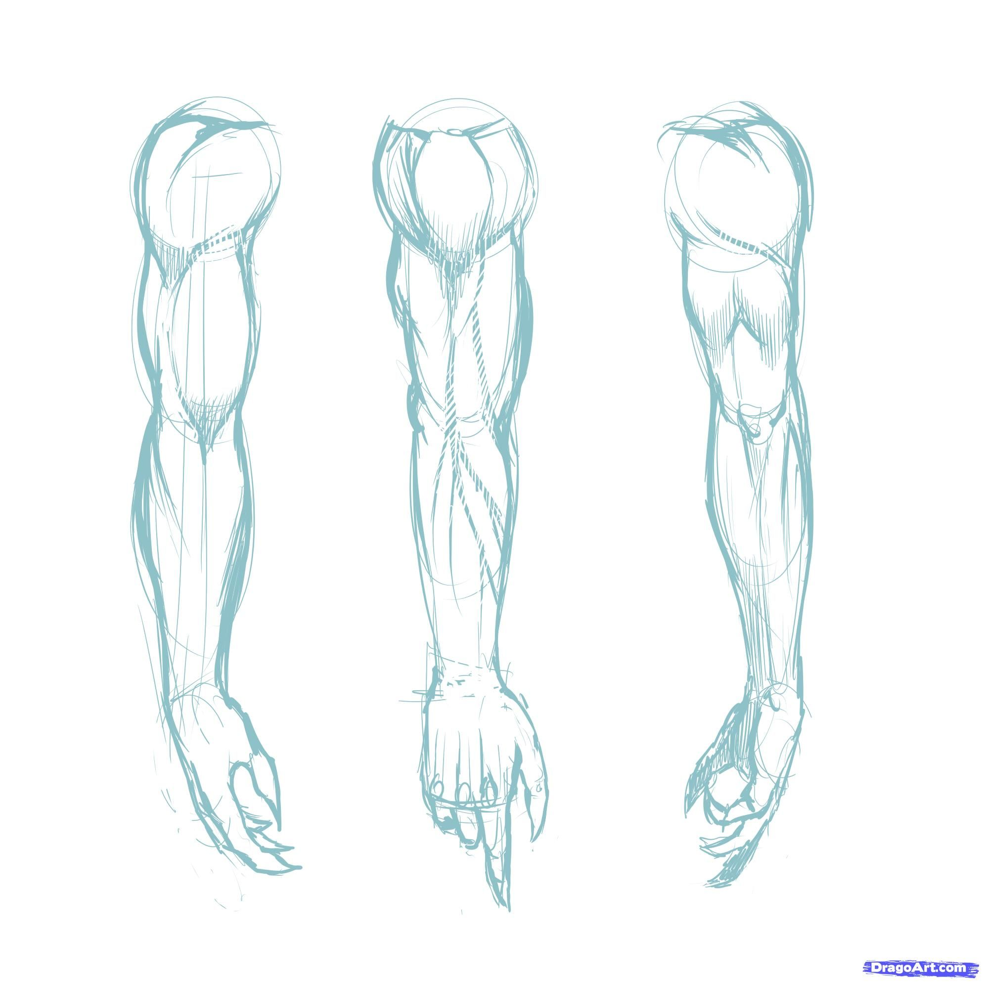 Muscle Arm Drawing At Getdrawings