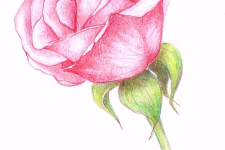 Nice Easy Flower Drawings