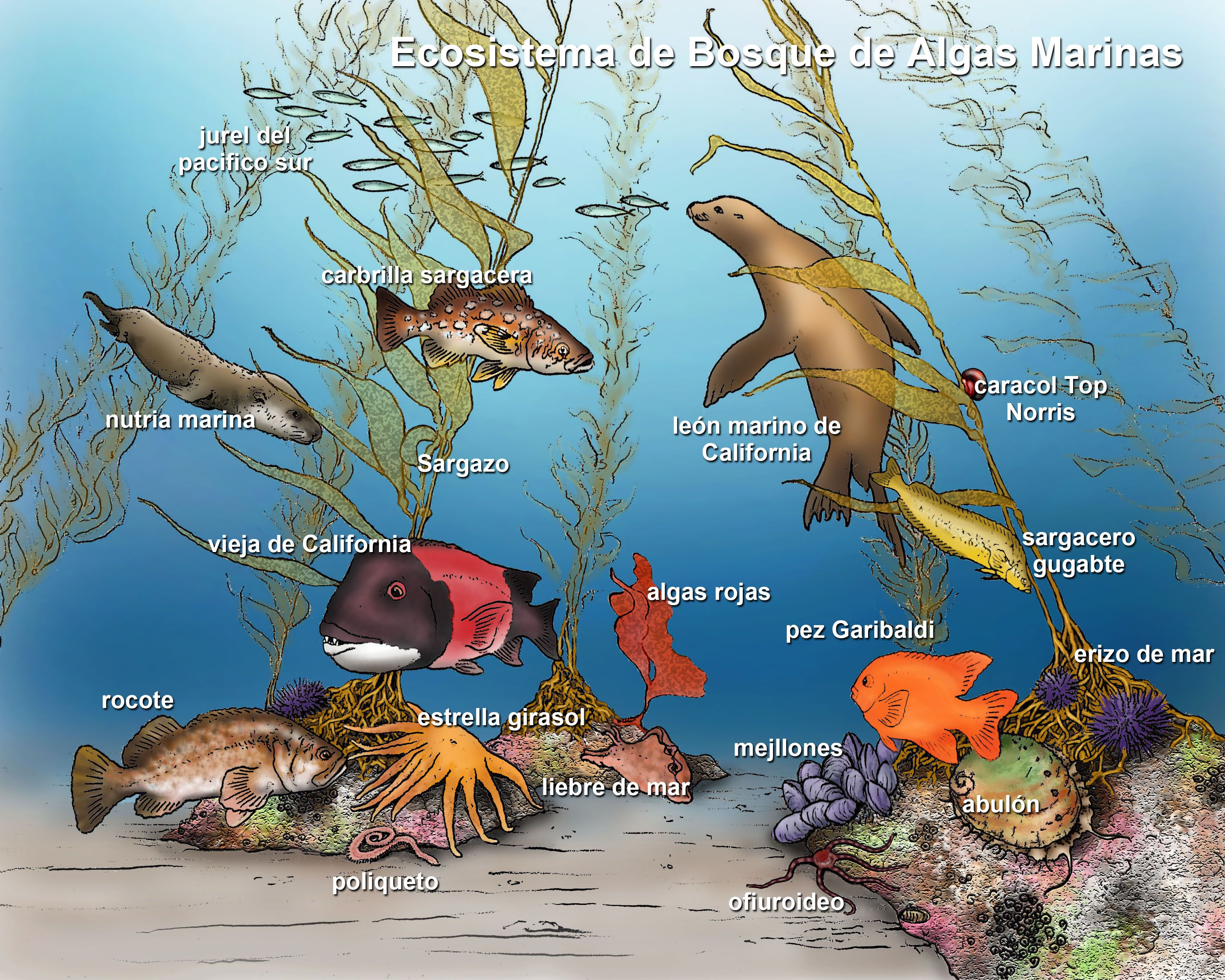 Ocean Ecosystem Drawing At Getdrawings