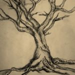 Pencil Tree Drawing At Getdrawings Free Download