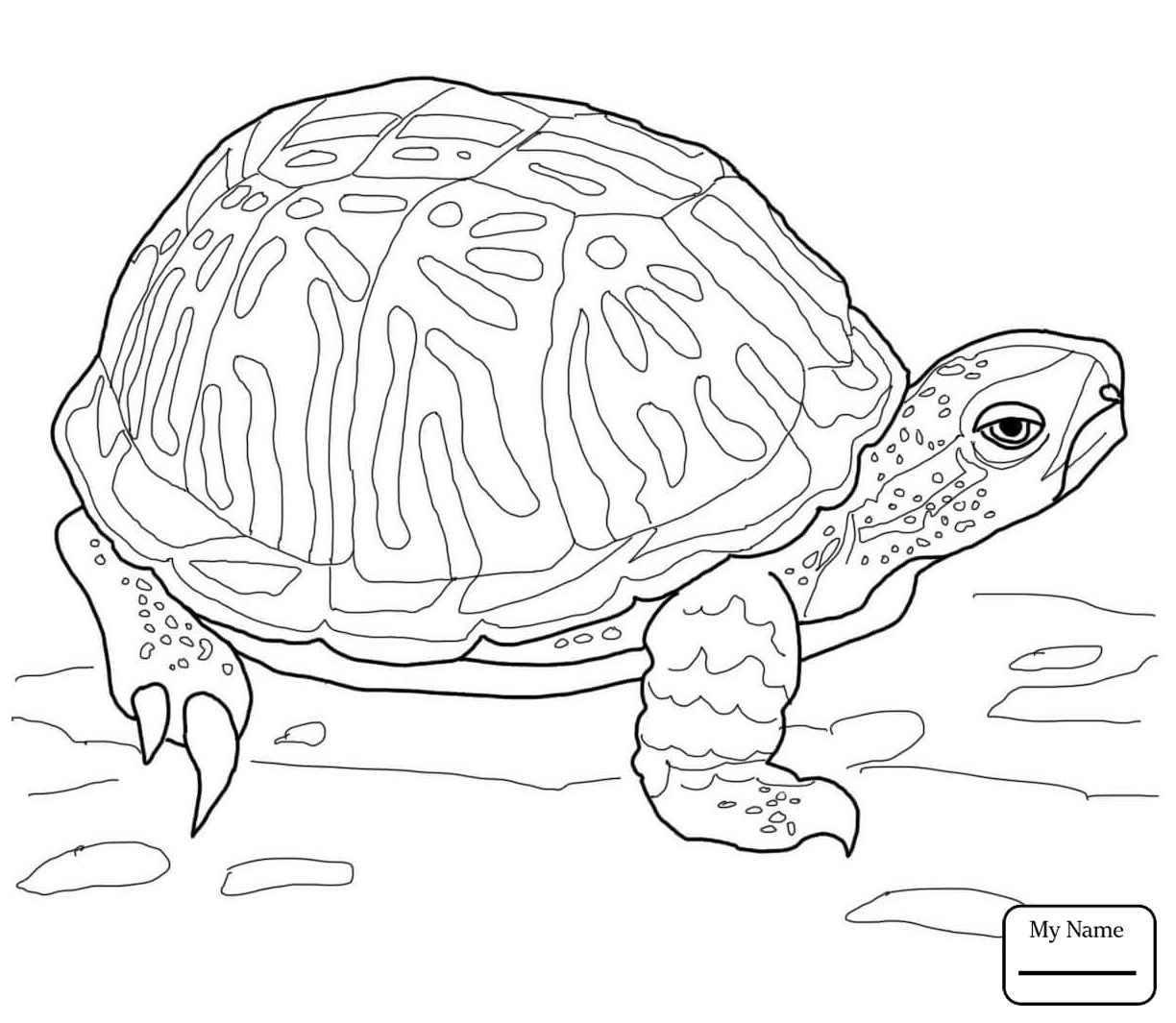 Baby Florida Snapping Turtle | Wiring Diagram Database